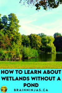 Are you trying to teach wetlands in Alberta but there isn't a nearby pond and you can't take a field trip? That's exactly why we wrote this series of lessons, activities and assessments. Come take a look to see if they can help you get your planning done so you can enjoy the activities along with your upper elementary science students.